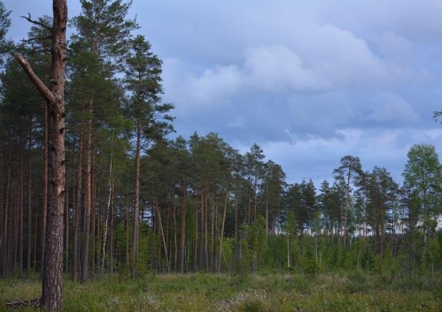 meža īpašumi